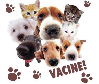 Vacinação Anti-Rábica e Identificação Electrónica